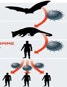 CoronaVirus Transport