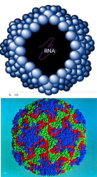 RhinoVirus-Specific