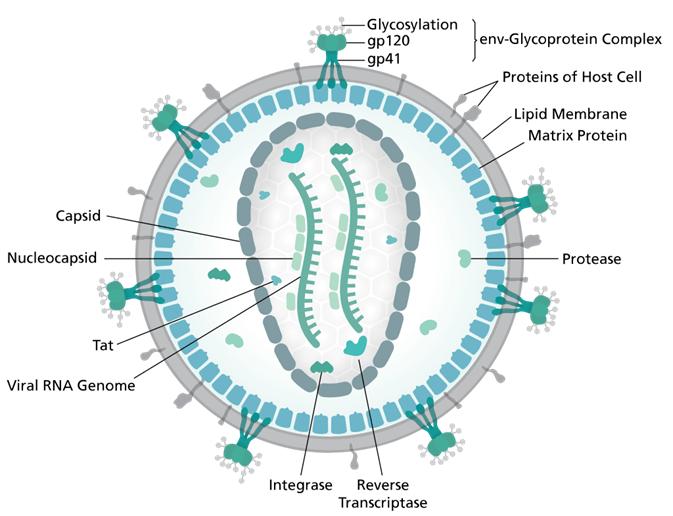 HIV Property