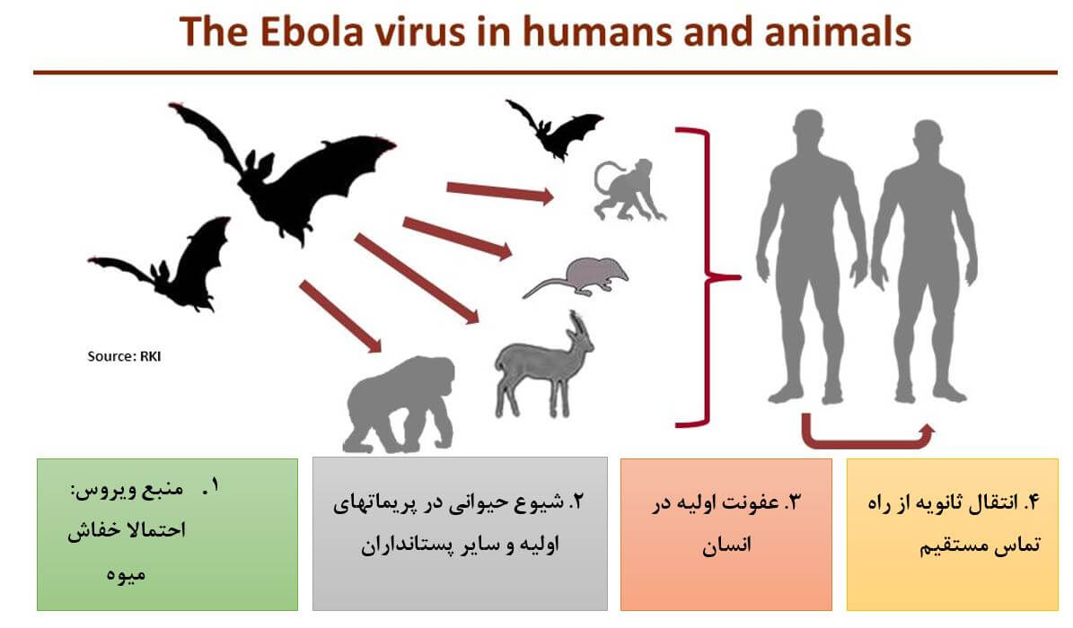 The Ebola Virus in Humans and Animals